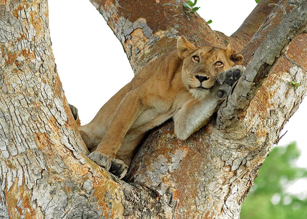 Primate and Wild Life Safari